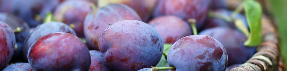 Plums are a Superfood